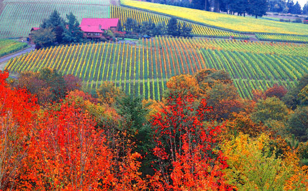 Wine Tasting Photograph - The View From Red Ridge by Margaret Hood