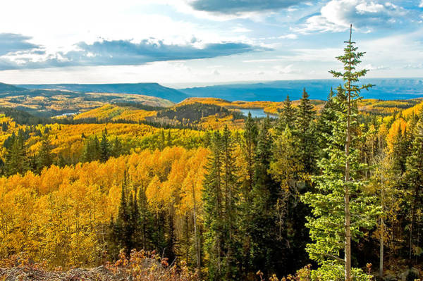 Grand Mesa National Forest Photograph - The View From The Top by John Bartelt