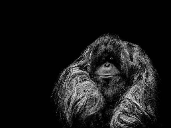 Primate Photograph - The Vigilante by Paul Neville