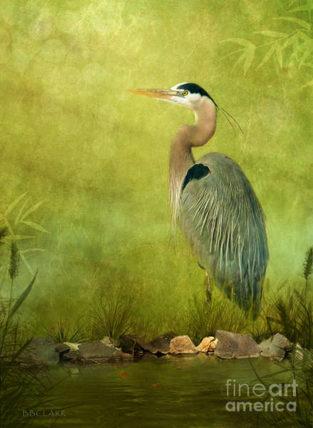 Great Blue Heron Wall Art - Photograph - The Wait by Beve Brown-Clark Photography