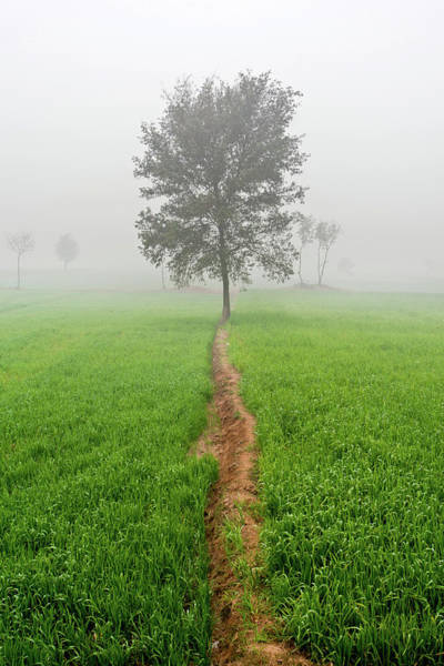 Photograph - The Walking Tree by Awais Yaqub