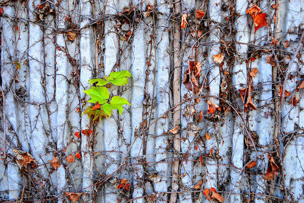 Green And Gray Photograph - The Wall by Glenn McCarthy Art and Photography