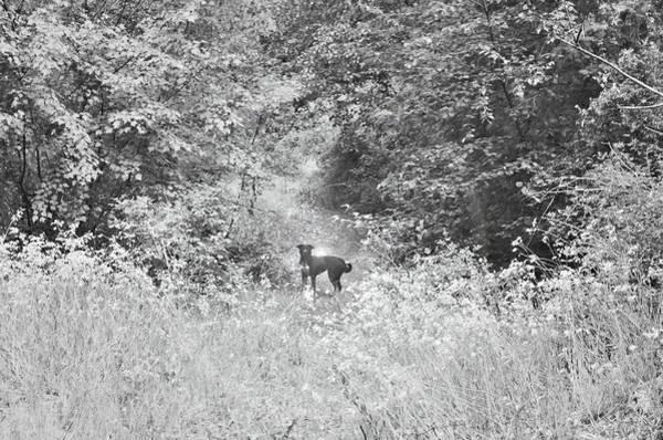 Photograph - The Wanderer by Tara Turner