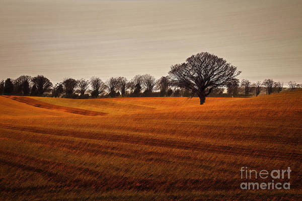 Wall Art - Photograph - The Wanted Tree II by Richard Thomas