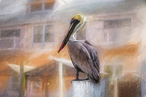 Pelican Mixed Media - The Watcher by Joel Witmeyer