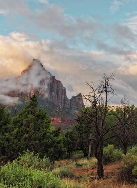 Photograph - The Watchman At Dawn by Loree Johnson