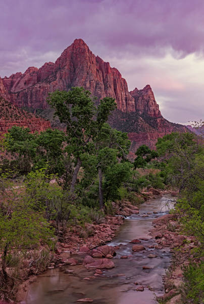 Photograph - The Watchman At Dusk by Loree Johnson