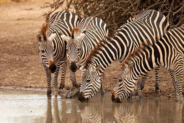 Photograph - The Waterhole by John  Nickerson