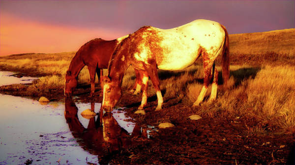 Photograph - The Watering Hole by Bryan Smith