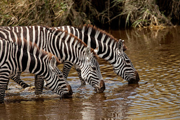 Photograph - The Watering Hole by John  Nickerson