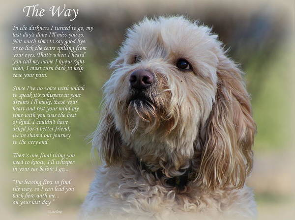 Wall Art - Photograph - The Way Golden Doodle by Sue Long