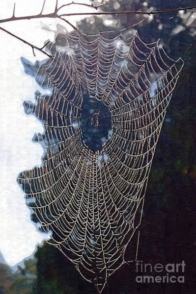 Photograph - The Web by Donna Bentley