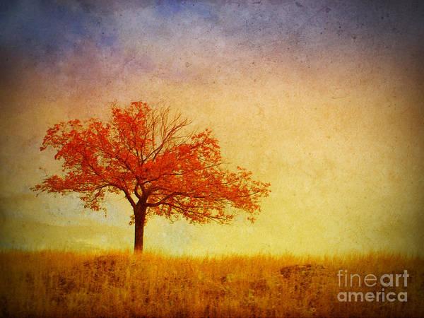 Photograph - The Wednesday Tree by Tara Turner