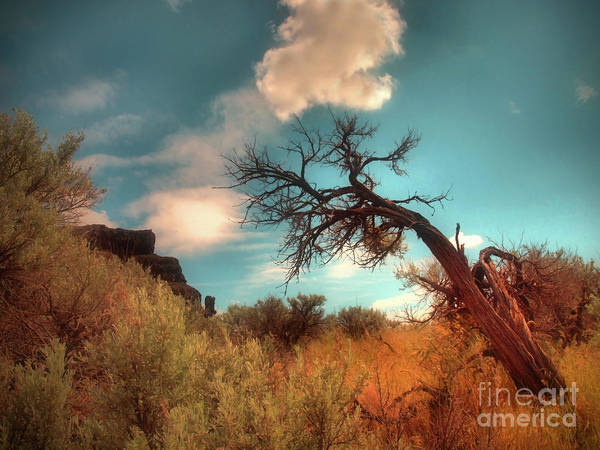 Photograph - The Weight Of Clouds by Tara Turner