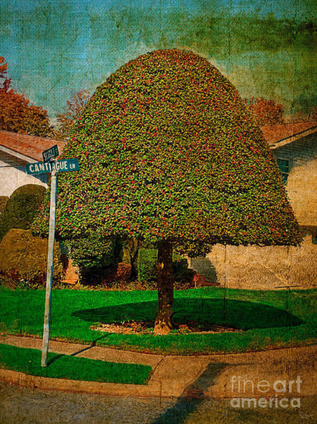 Photograph - The Well Groomed Tree by Jeff Breiman