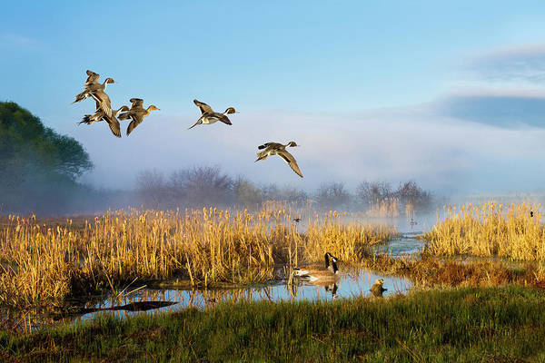 Photograph - The Wetlands Crop by TL Mair