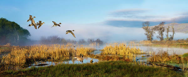 The Wetlands Art Print