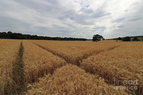 Photograph - The Wheat Cross by Julia Gavin