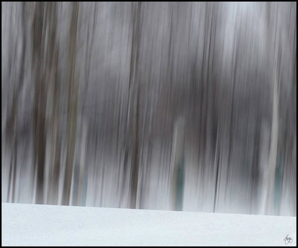 Photograph - The Whisper Of Winter Wood by Wayne King
