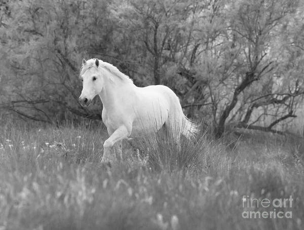 Wall Art - Photograph - The White Horse In The Forest by Carol Walker