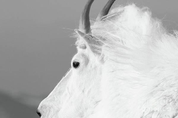 Photograph - The White King by Jim Garrison