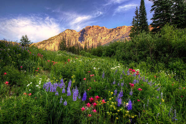 Photograph - The Wild Albion Basin  by Ryan Smith