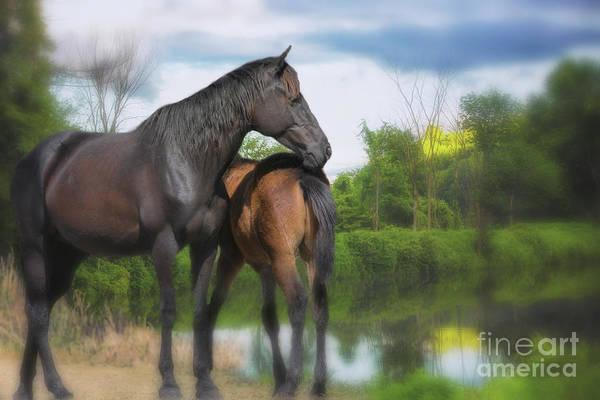 Photograph - The Wild Horses Of La Chura Trail by Mary Lou Chmura