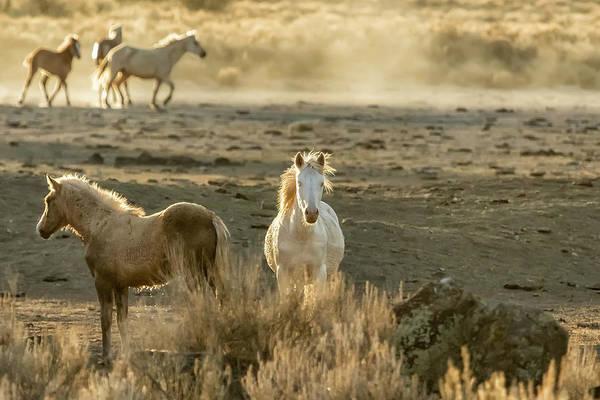Photograph - The Wild Spirit by Belinda Greb