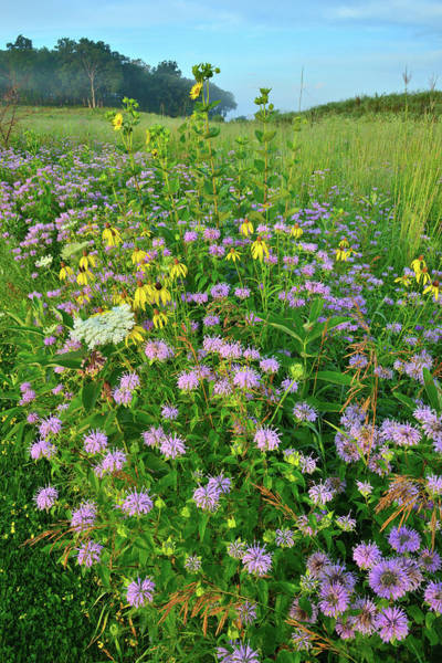 Photograph - The Wildflowers Of Glacial Park's Lost Valley by Ray Mathis