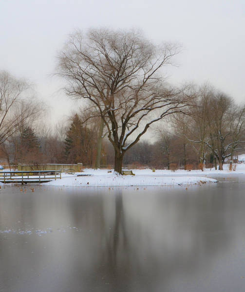 Wall Art - Photograph - The Willows Park - Newtown Square In Winter by Bill Cannon