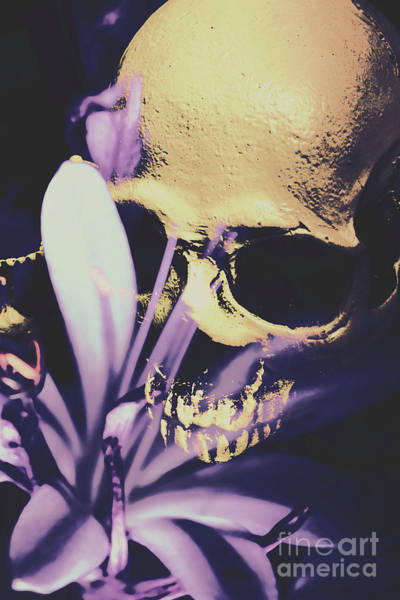 Bone Photograph - The Wilted Weather Underground by Jorgo Photography - Wall Art Gallery