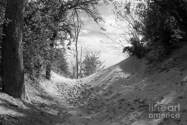 Photograph - The Windy Path by Cathy Beharriell