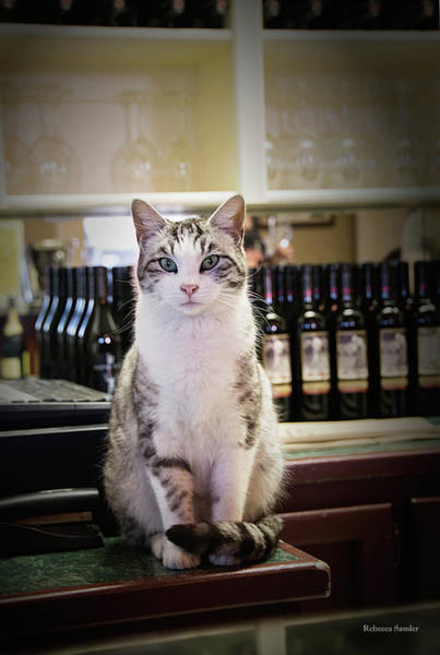 Photograph - The Winery Cat by Rebecca Samler