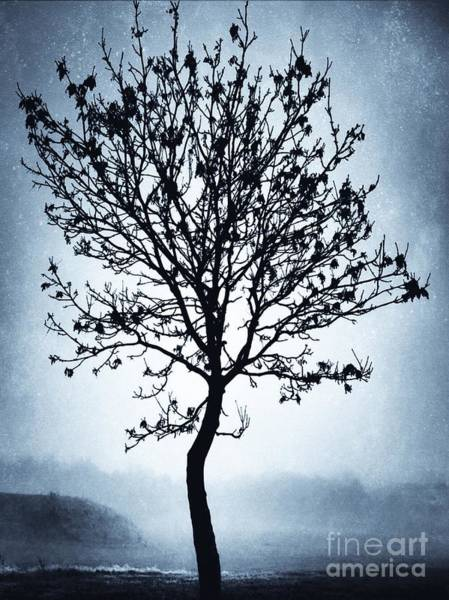 Wall Art - Photograph - The Winter Tree by John Edwards