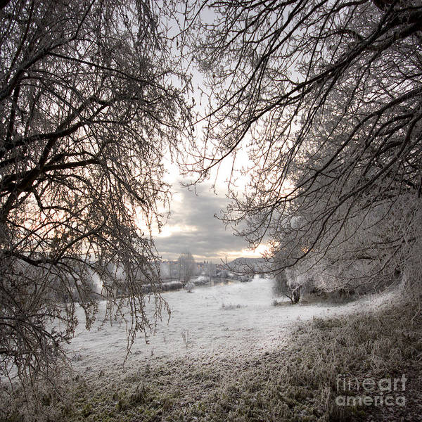 Wall Art - Photograph - The Wintery Landscape by Angel Ciesniarska