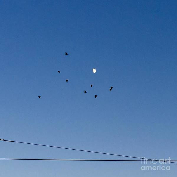 Photograph - The Wires, The Birds, And The Moon by Victor K