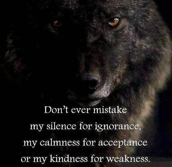 Photograph - The Wolf Knows Nfs by VIVA Anderson