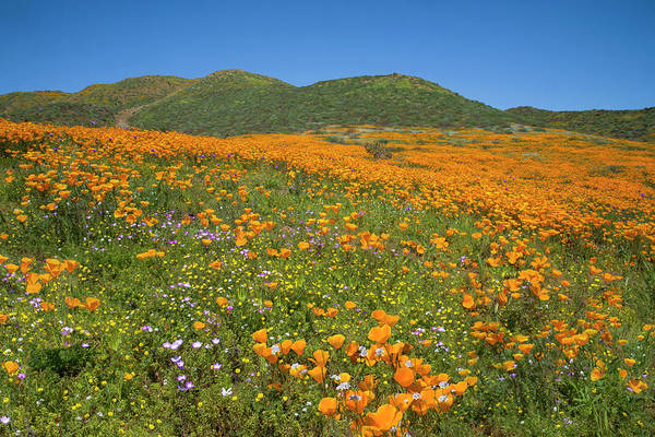Photograph - The Wonders Of The Walker Canyon Superbloom by Lynn Bauer