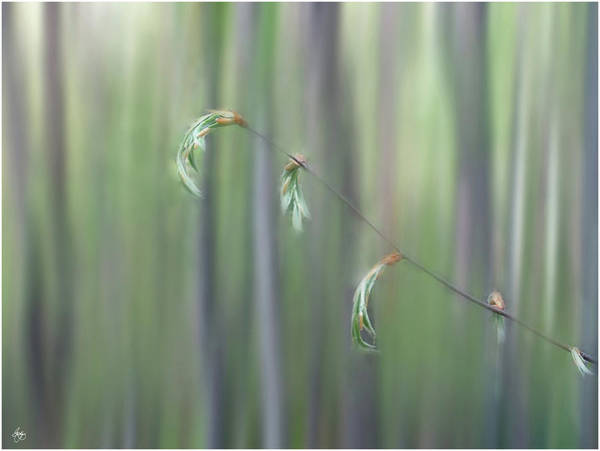 Photograph - The Wondrous Lightness Of Early Spring by Wayne King
