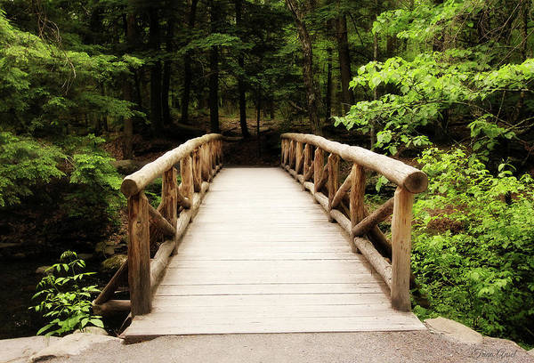 Photograph - The Wooden Bridge by Trina Ansel