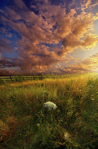 Photograph - The Words I'll Never Find by Phil Koch