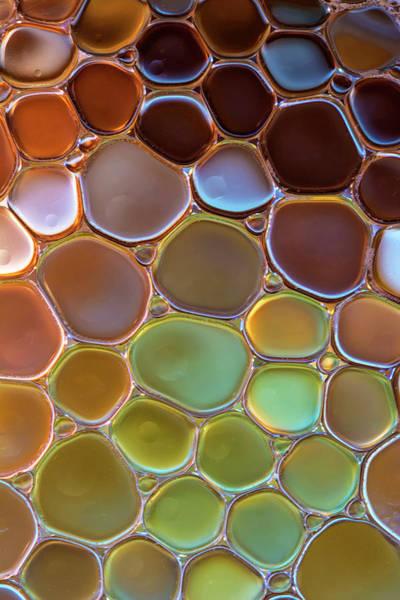 Wall Art - Photograph - The World Of Bubbles II by Jaroslaw Blaminsky