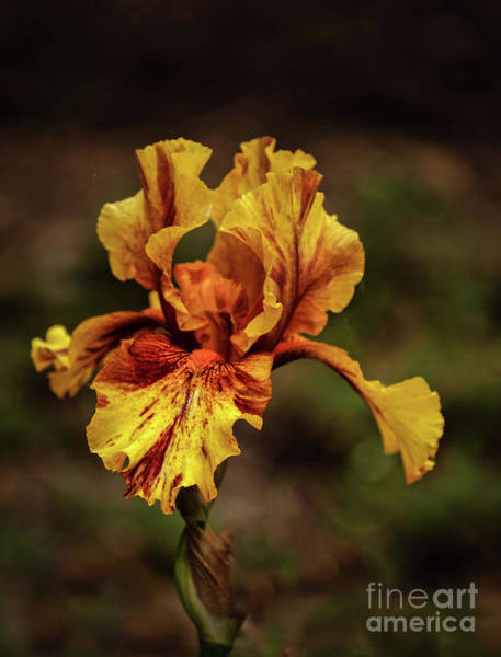 Bisexual Photograph - The Yellow Beauty by Robert Bales
