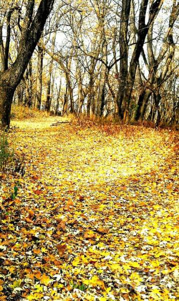 Millrace Wall Art - Photograph - The Yellow Leaf Road by Scott D Van Osdol
