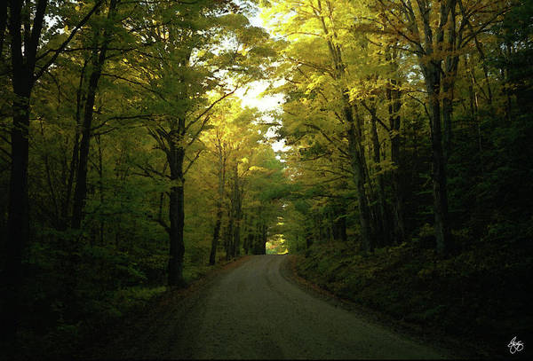 Photograph - The Yellow Road by Wayne King