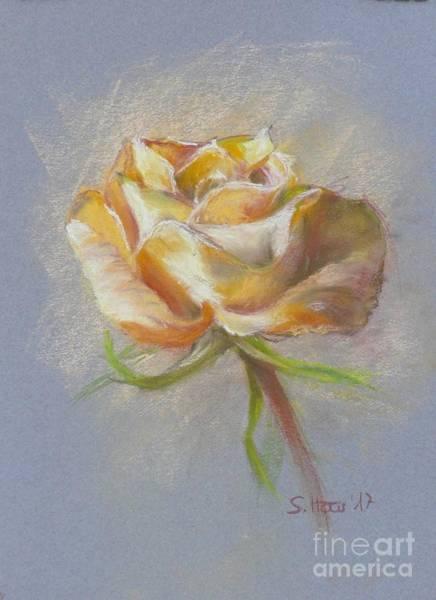Wall Art - Drawing - The Yellow Rose by Sabina Haas