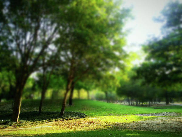 Photograph - The Yellow Spot by Atullya N Srivastava