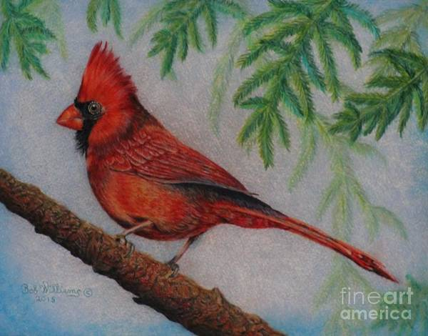 Painting - The Young Cardinal by Bob Williams