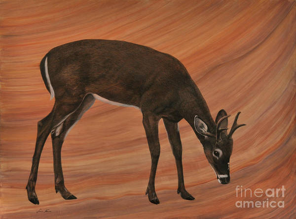 White Tailed Deer Drawing - The Young King by Susan Fraser SCA  B Sc