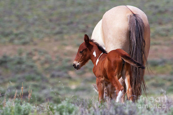 Photograph - The Young Redhead by Jim Garrison